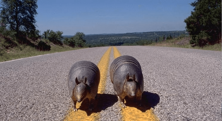 EDITORIAL: Yellow Stripes and Armadillos