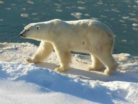 John Coleman's Global Warming Scam
